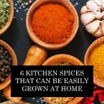 6 Kitchen Spices That Can Be Easily Grown At Home