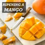 Ripening a Mango